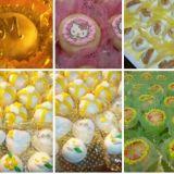 Kit doce Shekinah