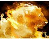Lion S&E Segurança e Recepção