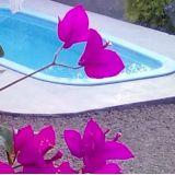 Limpeza de piscinas em Criciúma