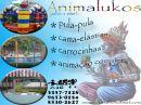 Animalukos festas e eventos