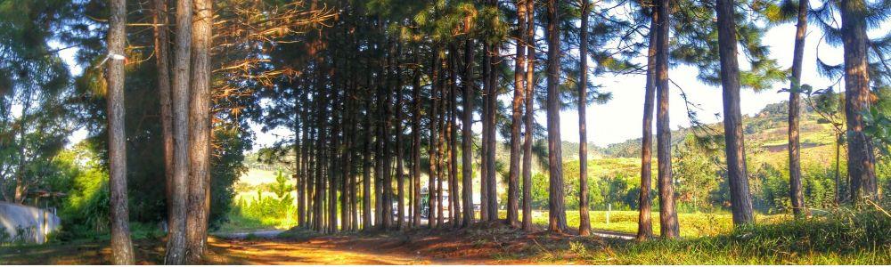 Espaço Pinus - Eventos e Hospedagem