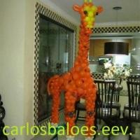 girafa safari