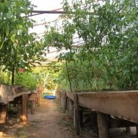 Na horta orgânica pode aproveitar o melhor das verduras.