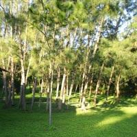 jardins e gramados