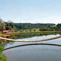 #lago #pesqueiro
