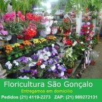 Floricultura são gonçalo (21) 3710-5243