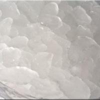 Gelo Escama