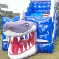 tobogã medio tubarão