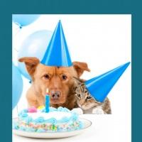 Seu pet merece todo o carinho e principalmente no seu aniversário! Temos Kit festas para pet.